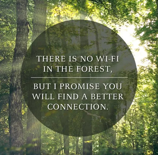 There is no wifi in the forest, but I promise you will find a better connection
